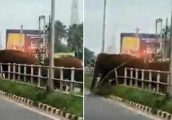 L'elefante rompe la barriera stradale per far attraversare la mandria Il video di un elefante femmina che rompe una barriera per aiutare la mandria ad attraversare una strada trafficata è diventato virale in India - CorriereTV