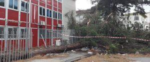 L'albero caduto davanti alla scuola Einaudi a Palermo