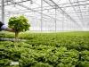 Clima taglia produzione agricola, crolla vino -12%