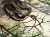 Il virus della Cina è arrivato alluomo dai serpenti