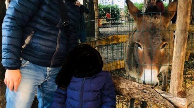 animali, calatafimi segesta, Trapani, Cronaca