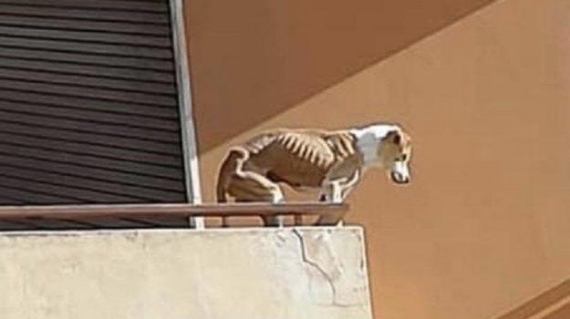 animali, Trapani, Cronaca
