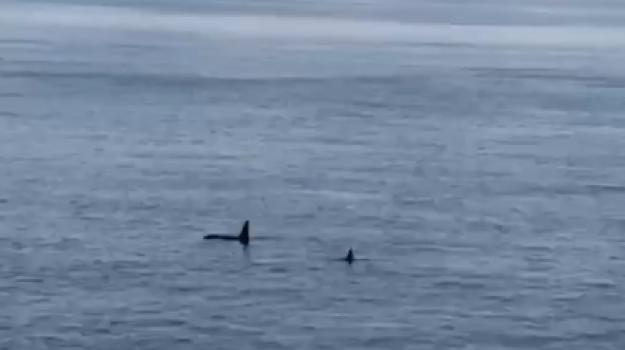 orche, Messina, Cronaca