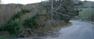 Rami e alberi caduti a causa del forte vento