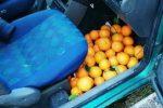 Ladro di arance sorpreso a Mineo: è ai domiciliari