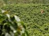 Coltivare cacao e caffè, Bologna insegna a giovani Camerun