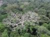 Operazione trasparenza su tutela foreste, nasce portale Fao