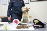 Mascali, il fiuto del cane scova la droga in casa di un pusher