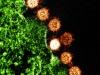 Particelle del virus della Sars (fonte: NIAID)