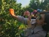 Cina alla scoperta delle arance rosse di Sicilia (foto Oranfrizer)