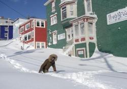 Incredibile tempesta di neve in Canada: dichiarato lo stato di emergenza Neve record nella provincia di Terranova e Labrador. Mobilitato l'esercito - CorriereTV