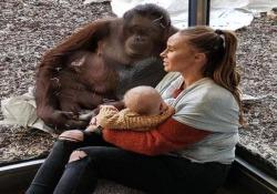 L'emozionante incontro tra una donna che allatta e un orango femmina La scena da milioni di visualizzazioni è stata ripresa allo zoo di Schönbrunn, a Vienna - CorriereTV