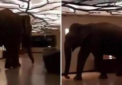 Un grosso elefante si intrufola nell'hotel a cinque stelle  Il filmato è stato girato qualche giorno fa nello Sri Lanka ed è  stato visualizzato oltre 6 milioni di volte - CorriereTV