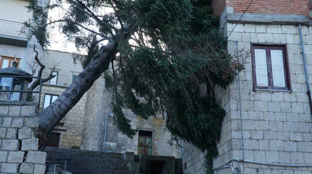 Maltempo, vento, Palermo, Cronaca