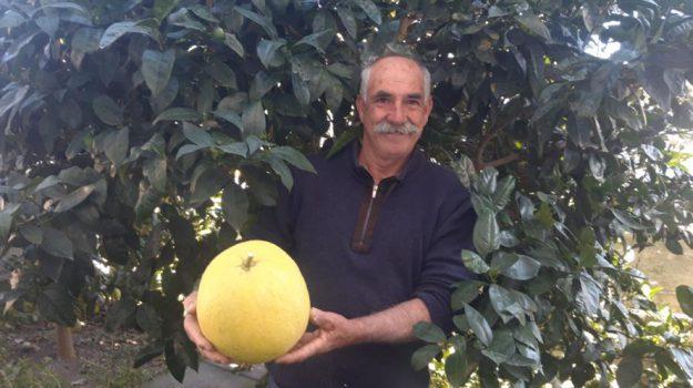 frutta, Messina, Società