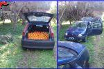 Ladri d'arance a Castel di Iudica: sequestrate le auto utilizzate per il furto