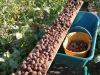 Toscana riscopre chiocciola a tavola ma produzione non basta