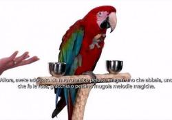 Come accudire i cuccioli: le lezioni del Piccolo Yeti Una speciale lezione di pet care con il protagonista del film  - Corriere Tv