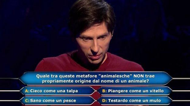 chi vuol essere milionario, tv, Gerry Scotti, Sicilia, Società
