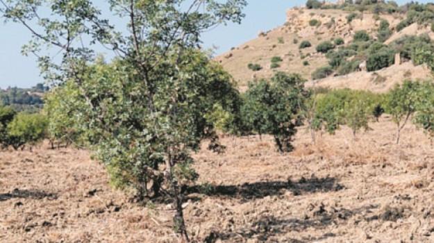 AGRICOLTURA, beni culturali, Agrigento, Economia