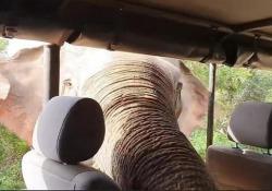 Sri Lanka, l'elefante goloso che terrorizza i turisti Si chiama «Gemunu», pesa oltre 5 tonnellate. Eccolo mentre tenta uno dei suoi tanti «furti» - CorriereTV