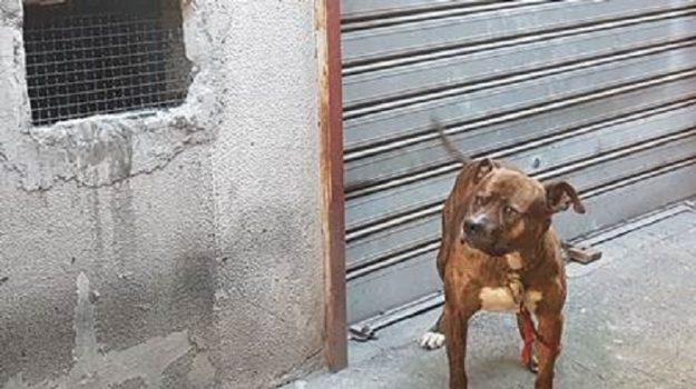 animali, Catania, Cronaca