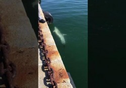 A Cagliari, senza il traffico delle navi, sono tornati i delfini Quando la natura si riappropria dei propri spazi, in tempi di coronavirus - CorriereTV