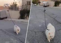 A Cipro c'è chi porta fuori il cane così Durante il blocco totale da Covid-19, un uomo a Cipro ha portato fuori il suo cagnolino con un drone - Dalla Rete