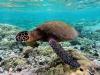 Boom di tartarughe marine in Sicilia, altri due nidi tra Ragusa e Siracusa