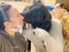 Santa Margherita, cani abbandonati in strada: il grido di allarme di una volontaria