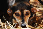 Gela, in sette a spasso con i cani sulla spiaggia: multati