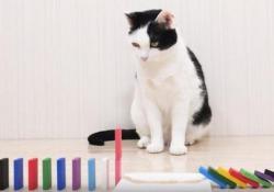 Gatti alle prese con le tesserine del Domino: il video da milioni di clic Ecco la reazione di questi felini alla caduta dei mattoncini del domino - Dalla Rete