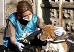 «Così ci occupiamo di cani e gatti di chi è ricoverato per Coronavirus» I volontari Leidaa in queste settimane stanno accudendo gli animali rimasti soli dopo che i loro proprietari sono finiti in ospedale per Covid-19 - Corriere Tv