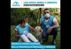 «In quest'emergenza il tuo cane ha bisogno di un veterinario? Noi di Leidaa ci siamo» I volontari della Lega Italiana Difesa Animali e Ambiente  in queste settimane stanno accudendo gli animali rimasti soli dopo che i loro proprietari sono finiti in ospedale per Covid-19 - Corriere Tv