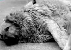 «LEIDAA per emergenza Covid-19». Un sms per aiutare gli animali soli Da oggi al 26 aprile, infatti, sarà possibile donare all'associazione 2 euro inviando un sms al numero 45589 o 2-5-10 euro, a seconda della compagnia telefonica, chiamandolo da telefono fisso - Corriere Tv