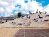 Tour virtuale nella Valle del Belice, musei visitabili con un click