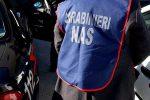 Controlli in aziende del Catanese, sequestrato un mattatoio abusivo a Paternò
