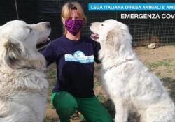 «Una nuova vita per questi due maremmani»: così la Leidaa li ha salvati  I volontari in campo per prestare aiuto a quanti, durante l'emergenza, non possono prendersi cura dei loro animali  - Corriere Tv
