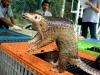 """L'Oms chiede lo stop della vendita di animali selvatici vivi nei mercati: """"Sono la fonte dei virus"""""""