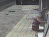 Raffica di furti in casa di anziani nel Messinese, sgominata una banda di sei rom