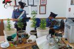 Una miniserra di cannabis nella mansarda di casa, denunciato a Ferla