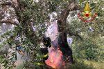 Incendi, forte scirocco alimenta fiamme nel Ragusano e nel Messinese