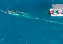 Australia: salva una balena intrappolata dalle reti e viene multato Il sommozzatore ha liberato un cucciolo di balena da una rete anti-squalo e ora rischia una multa pesante - CorriereTV