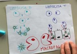 Che cosa succede al nostro sistema immunitario se attaccato da Covid La risposta del nostro organismo al coronavirus  - Corriere Tv