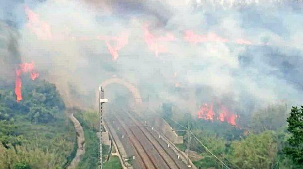 incendi, wwf, Sicilia, Cronaca