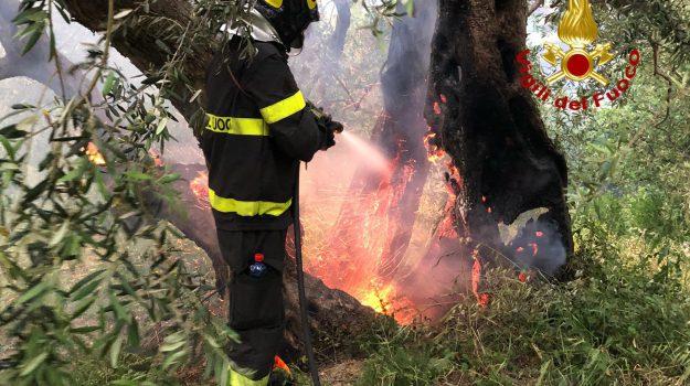 incendi, Ragusa, Cronaca