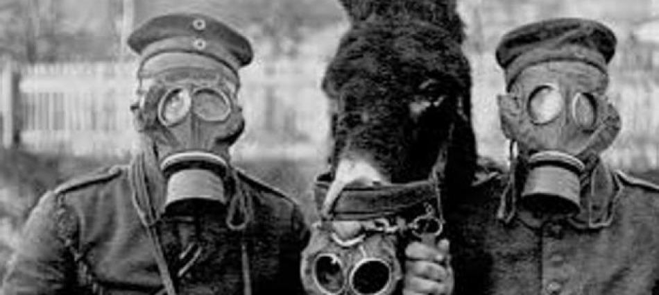 La Strage Degli Animali Nella Prima Guerra Mondiale Eroi Dimenticati E Compagni Fedeli Giornale Di Sicilia