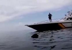 Spagna: avvistato uno squalo di 8 metri davanti alla costa di Granada Si tratta di uno squalo elefante, il secondo pesce più grande al mondo - CorriereTV