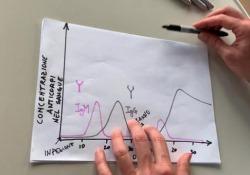 Test sierologici per il coronavirus, che cosa sono e a che cosa servono Come regolarsi nella scelta e l'importanza di affidarsi a esami certificati - Corriere Tv
