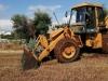 Xylella: Puglia, abbattuti 5 ulivi infetti nel Barese